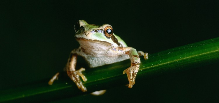 How to care for your amphibian