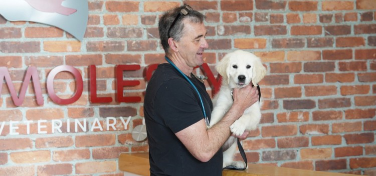 Pet care advice from experienced Vets & Nurses