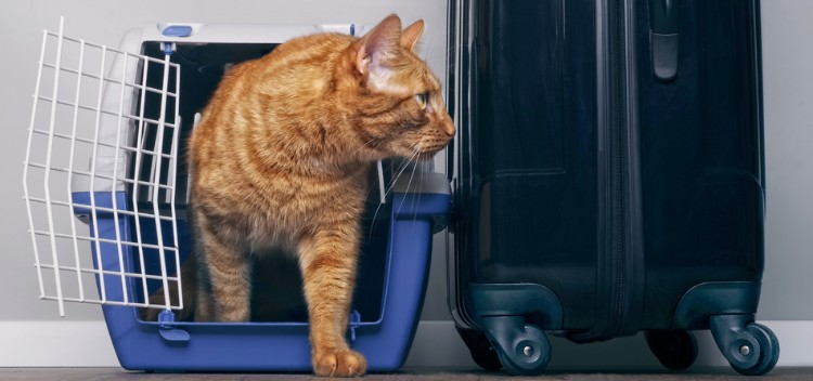 Animal health certificates for pet travel