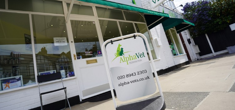 Out of Hours Vets for pets in Teddington