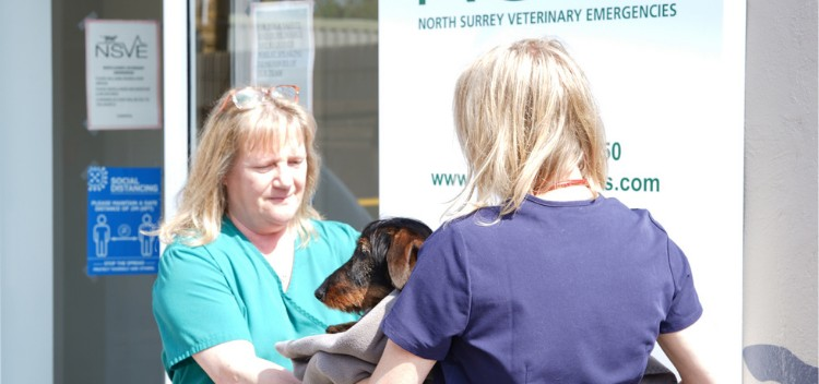 Find & Contact North Surrey Emergency Vets