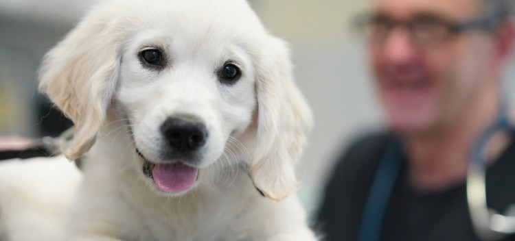 First-class vet services in Molesey