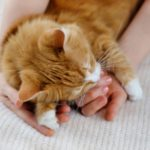 Why choose Molesey Vets for your cat's care