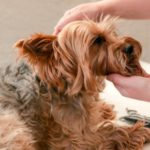 How to make your dog's day at Molesey Vets