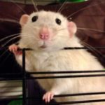 Alpha Vets explains why small furry pets need a vet