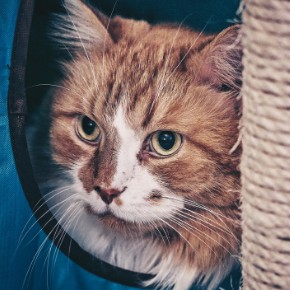 Going away? Get our cat holiday care checklist