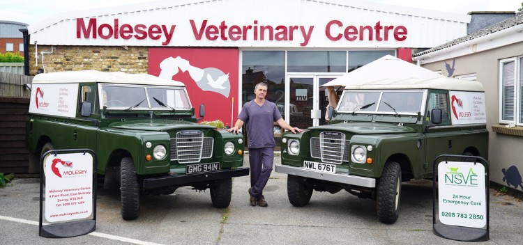 Meet our team at Molesey Vets