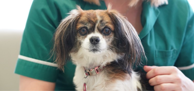 Pet physiotherapy in Teddington