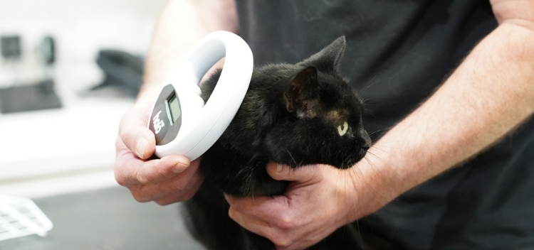 Pet microchipping in Molesey
