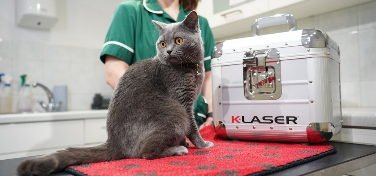 K-Laser therapy for pets at Molesey Vets