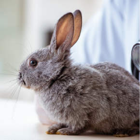 Seven essential health checks for your rabbit this Autumn