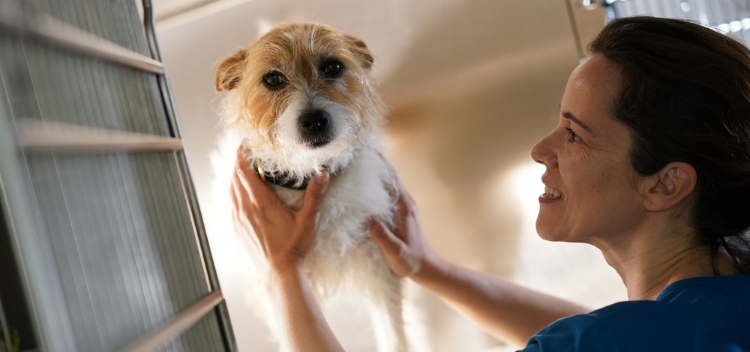 Out of Hours Vets for pets in Claygate