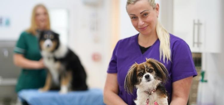 Recruitment - veterinary careers in Teddington